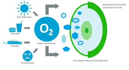 free-radicals-vs-antioxidants_