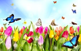 6359516072445244531069085440_spring-06
