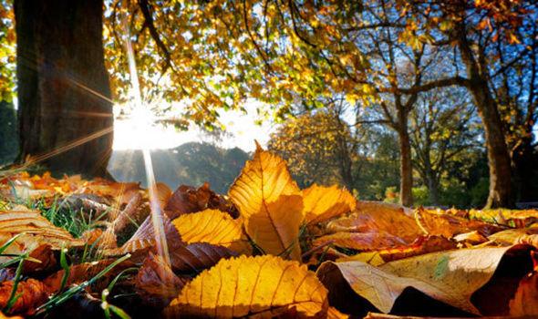 leaves-autumn-sun-615365